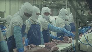 CPF เปิดกระบวนการผลิตหมูคุณภาพ ปลอดโรค ปลอดภัย
