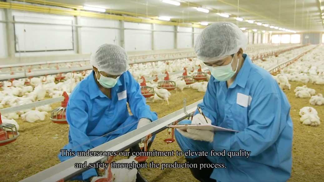 CPF ครัวโลกที่ยั่งยืน ตอน การเลี้ยงไก่ระบบ compartment