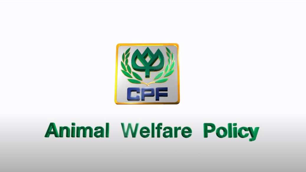 CPF ครัวโลกที่ยั่งยืน ตอน นโยบายสวัสดิภาพสัตว์