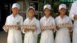 ซีพี CSR เลี้ยงไก่ไข่